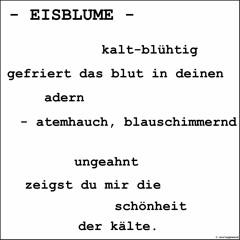 EISBLUME - Andreas Koellner