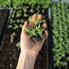 """""""Plante +, Corte -"""": Ação na praça promove doação de mudas e coleta óleo de cozinha"""