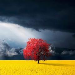 ألِف مبروك و الباقِ بحياتِك - ضُرغام الربيعي