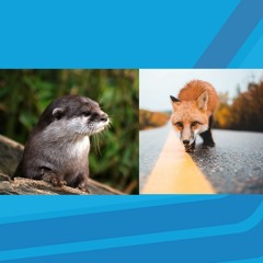The Way It Is; Peter Geoghan on fox cubs and otters by the river Nore in the City Centre