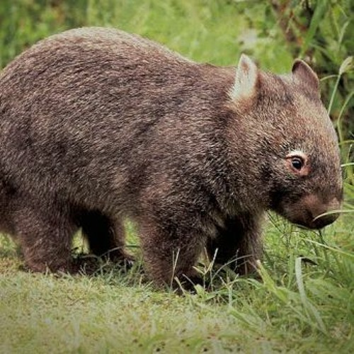 AMT388: Lolly Stick Jokes, Pizza Cutters, and Wombat Scat - 6 August 2020