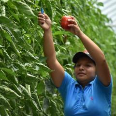 T3.E13. Protección social para jornaleras agrícolas