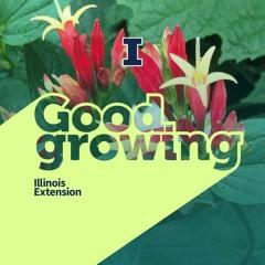 Ep. 85 Favorite flowering plants with Elizabeth Wahle #GoodGrowing
