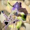 Download Ƈօռʝʊռӄȶɨʋǟʟ Würmized Mix Mp3