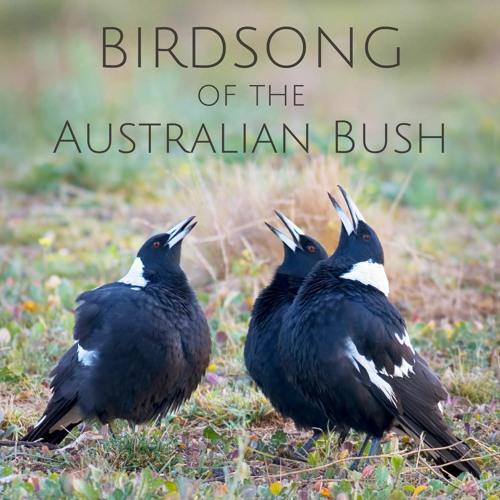 'Birdsong of the Australian Bush' - Album Sample