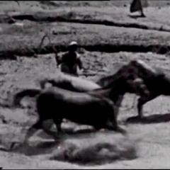 Workhorse حصان الطين