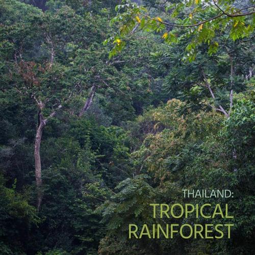 Sounds of Wild Thailand I: 'Thailand's Tropical Rainforest'