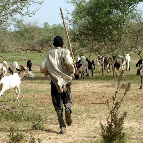 Zoonosen – Wenn Tiere Menschen krank machen (2007)