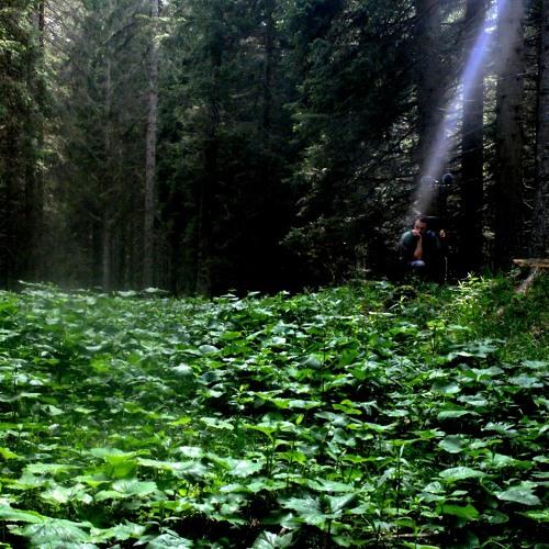 La Foresta Dei Violini