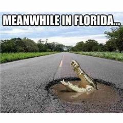 Olay Ufku: Gökten Tosbağa Yağan Florida ve Apokalipsin En Çirkin Hali: Tam Kapanma