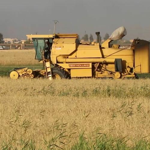 من الرقة للدير - الحلقة 108 - متابعة موسم الحصاد