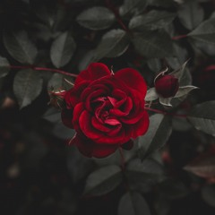 Roses - The Chainsmokers (LICARIO Remix Ft. PIRIOUS onthetrack)