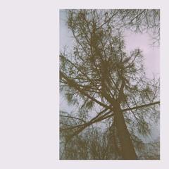Blear Moon - Windbreak
