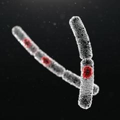 Microbe - Cereus