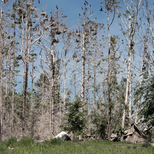 Birds and Bulldozers - 4/6/2021 - Jarviluoto Cormorants