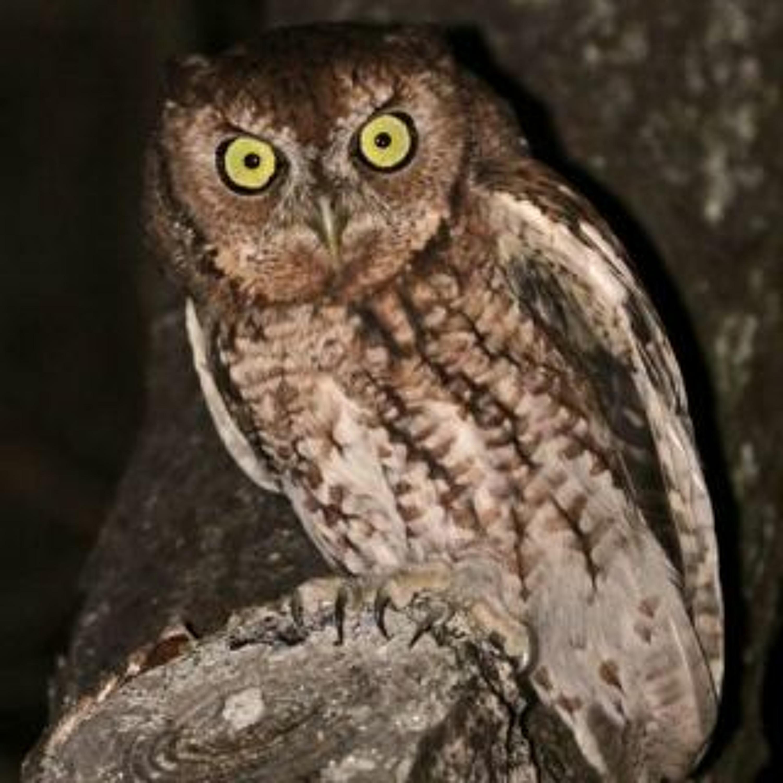 MiniEp - The Owl Theory