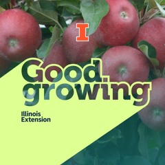 Ep. 83 Fall garden updates with Grant McCarty #goodgrowing