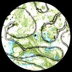 PREMIERE: Litherland - Paradaxia [ROADKILL]