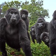 Ganja White Night & Liquid Stranger x Gorillaz - Gorillaz in the Jungle (Mashup)