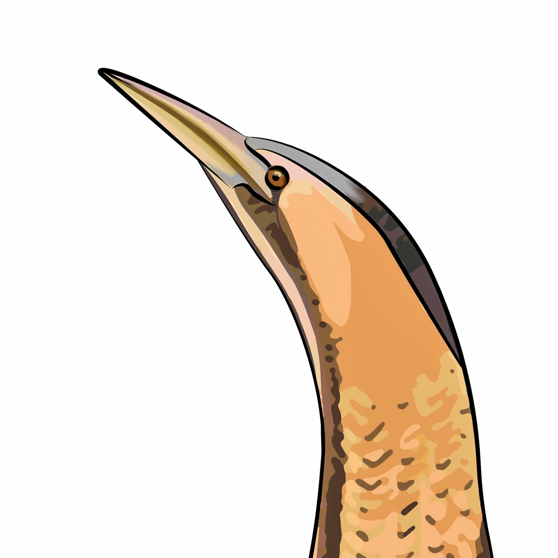 38: Från rördrommar till rovfåglar