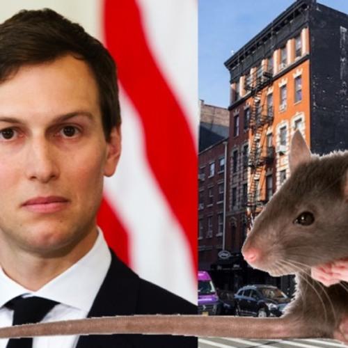 Rat Facts / Rent Strikes w/ Rebel Steps