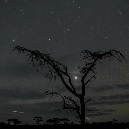 Dawn In The Maasai Mara