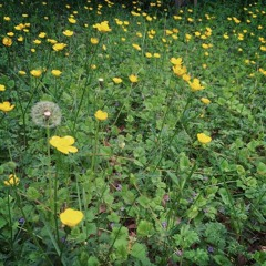 The Flowers In The Field