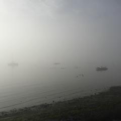 Estuary Fog (collab with Encym)