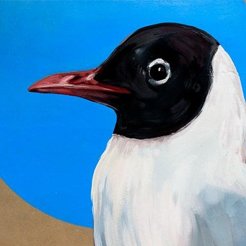 Gavina Riallera - Black-headed gull (Chroicocephalus ridibundus)