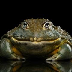 Bullfrog Stomp