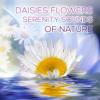 Snow Flower (Nature Sounds)