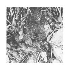 VAK47   J. Campbell - The Cormorant