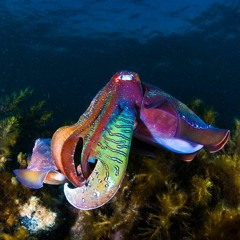 Cuttlefish madness – Making Cuttlefest accessible for everyone
