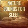 Nature Sounds for Sleep - Insomnia Therapy, Peaceful Music, Sleep Music to Help You Relax all Night, Instrumental Music for Massage Therapy, Yoga Music, Lullabies, New Age, Relaxing Nature Sounds