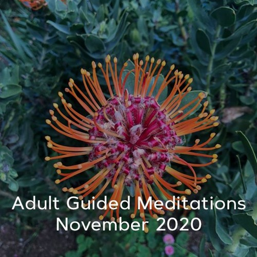 Adult Meditations - November 2020