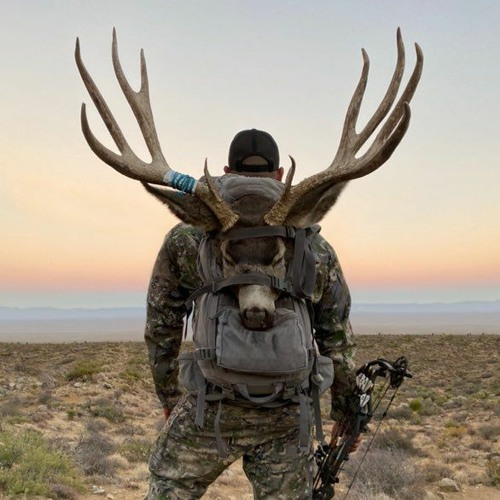 260- Mule Deer A-Z With Marlon Holden