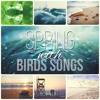Sound of Peaceful Birds