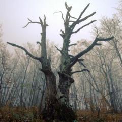 Graying Trees