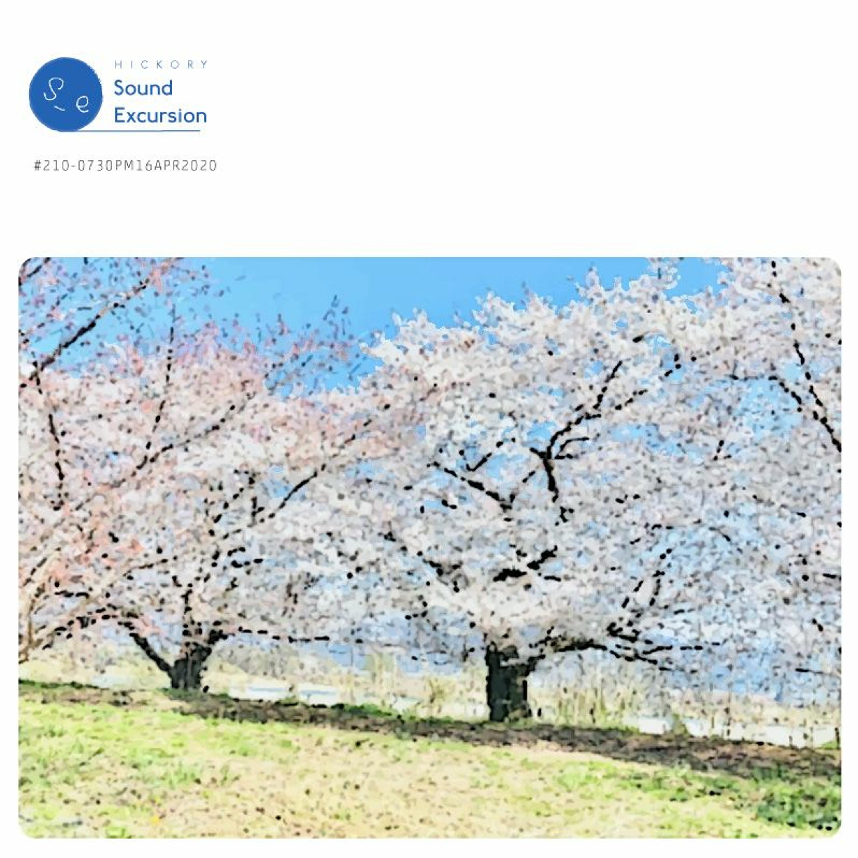 #210 - 竹内優美さん(バンド「Rose Cafe」/小学校教諭)- 桜づつみ - 16APR2020