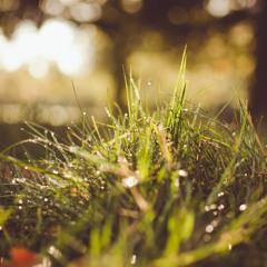Sunshine and Rain (Prod. Philosopha Beats)
