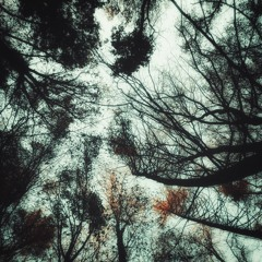 am Klang der Taube -- Episode 001: unter flüchtigen Fahnen