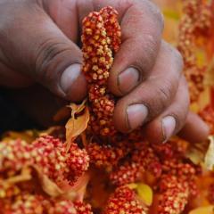 La santé des plantes, un élément fondamental pour assurer notre alimentation