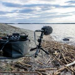 Seagulls over Lake Tuusula - MixPre-3 II 32-bit float & Audio-Technica BP4025