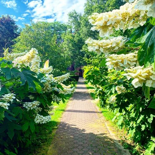 Morning Walking Meditation (15 minutes)