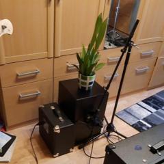 Bogenhanfpflanze