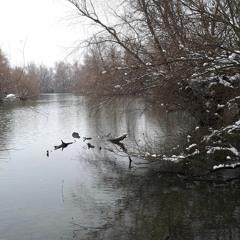 Winter Wetland sennheiser mkh8020