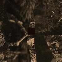 FIELDS - album preview