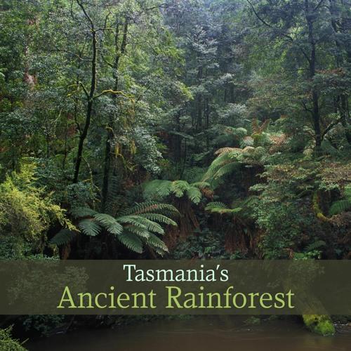 Album - 'Tasmania's Ancient Rainforest'