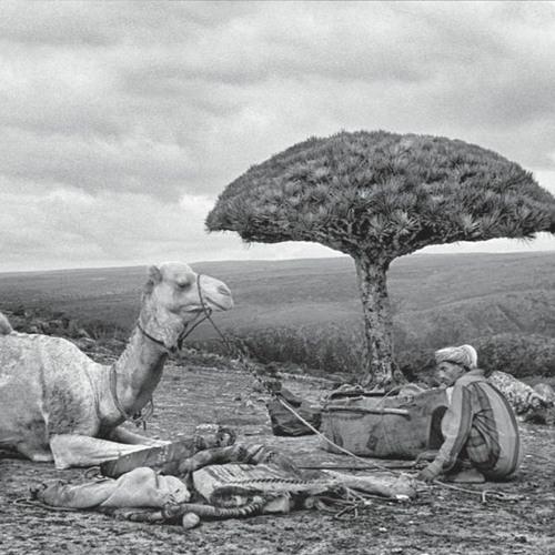 A propósito de Socotra. Conversación con Jordi Esteva