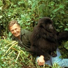David Attenborough type beat (series theme demo)